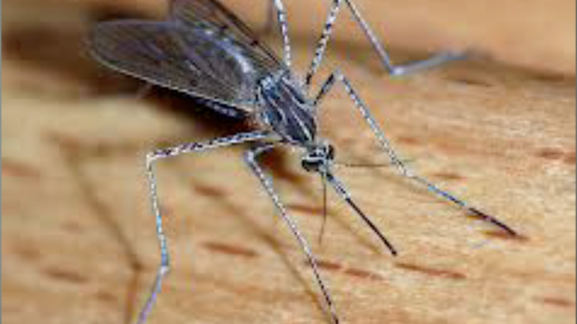 Mosquitoes: Youth Segment