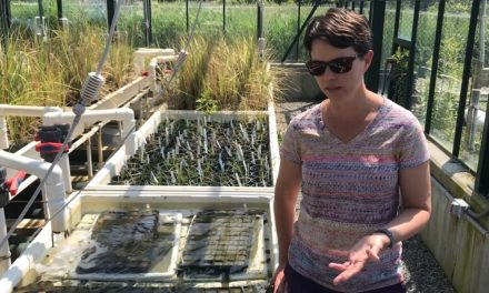For the Love of Seagrass – interviews with Coastal Ecologist