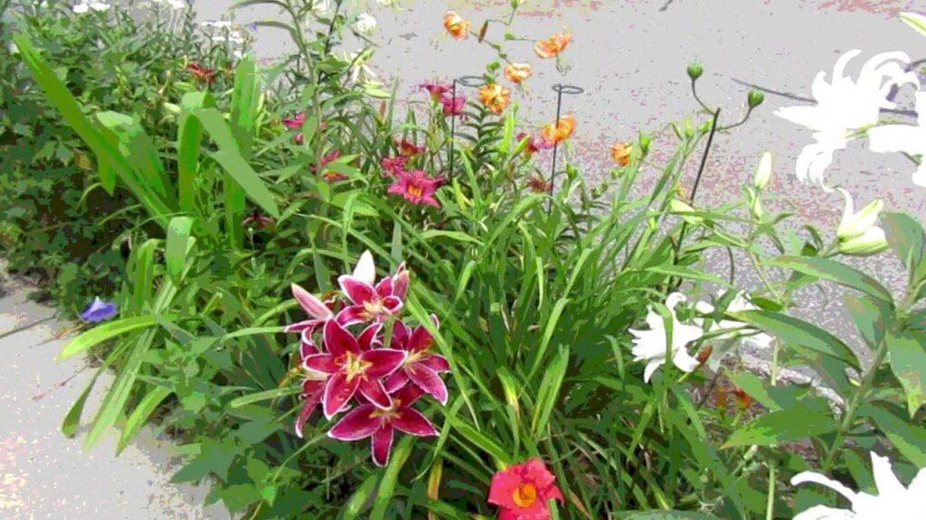 Scenes of the Seasons – Summer Flowers
