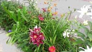 Scenes of the Seasons – Summer Flowers