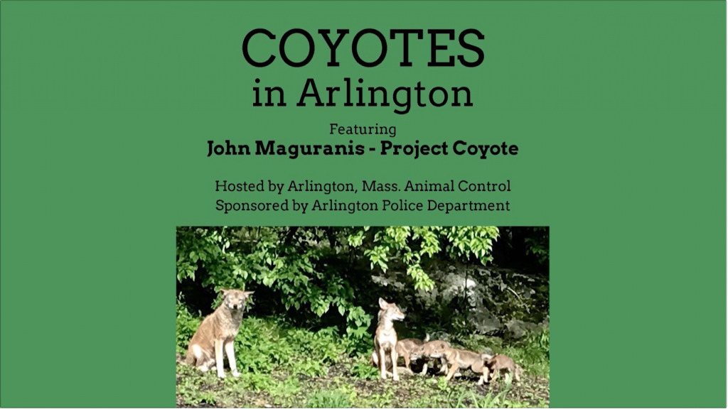 Coyotes in Arlington Discussion – July 31, 2019