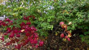 Scenes of the Seasons – Robbins Garden –  Fall 2019