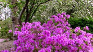 Scenes of the Seasons   Robbins Garden   Spring