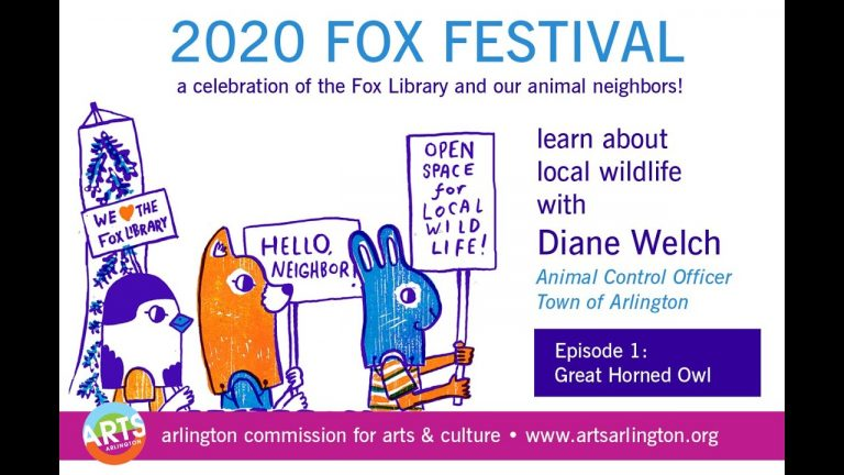 2020 Fox Festival: Meet a Great Horned Owl with Diane Welch