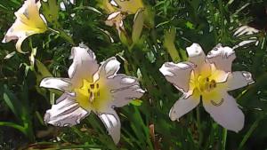 Scenes of the Seasons – Summer Flower Garden